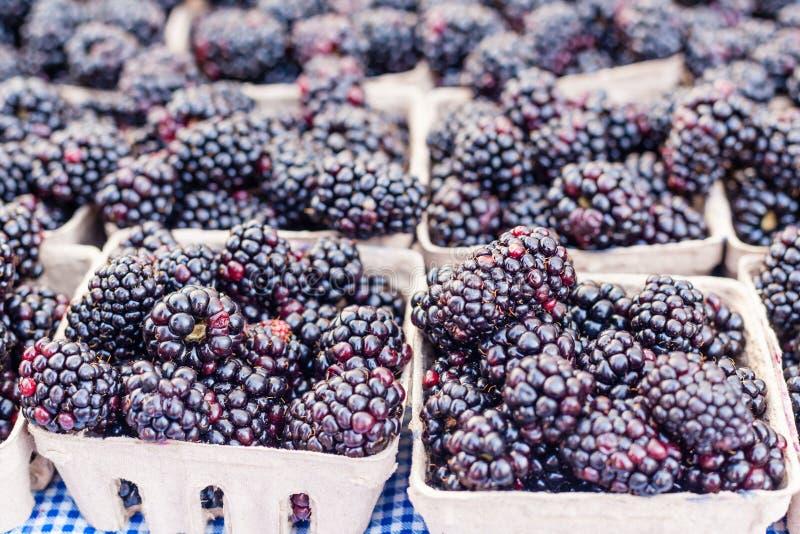 Download Blackberries stock photo. Image of snack, natural, blackberry - 37993310