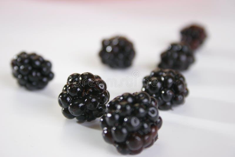 Blackberries royalty free stock photos