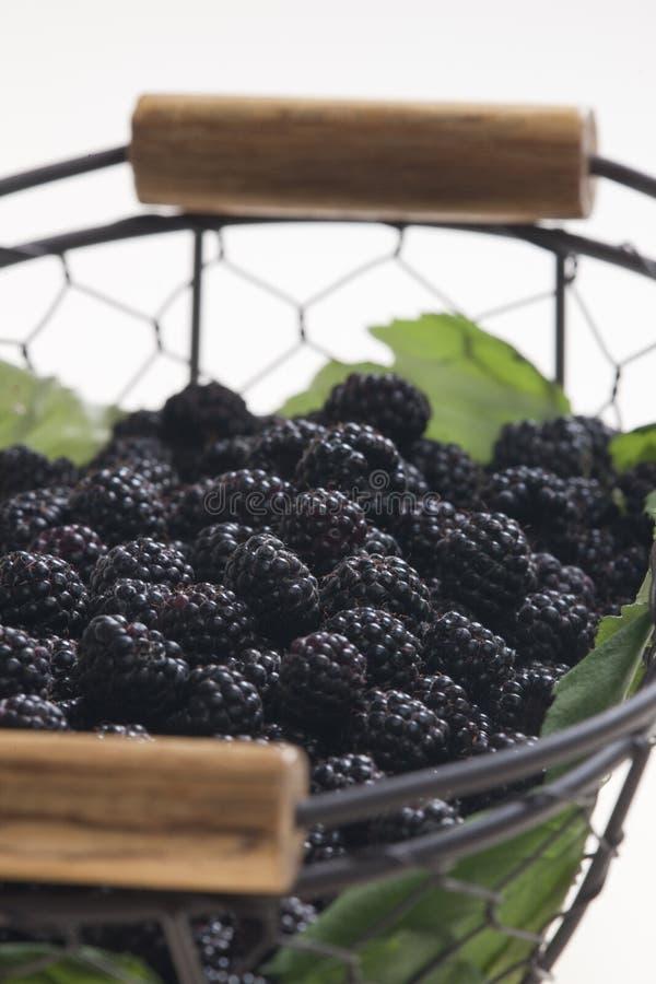 Download Blackberries in basket stock photo. Image of indoor, closeup - 10668950