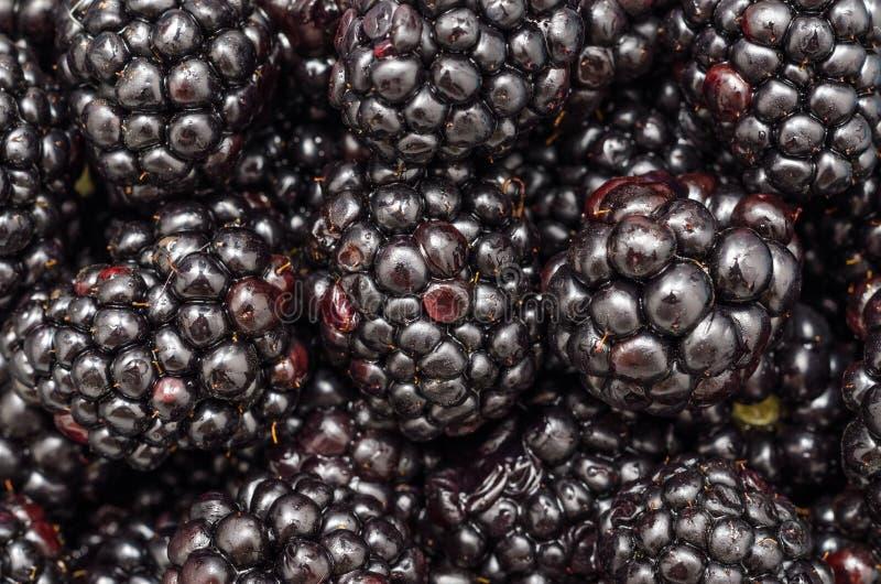 Blackberries Close Up stock photos