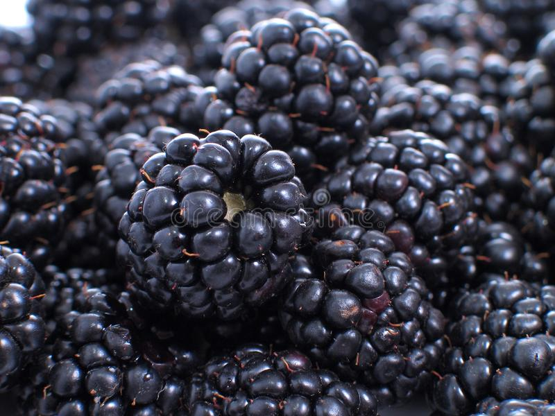 Blackberries. Group of fruits object royalty free stock image