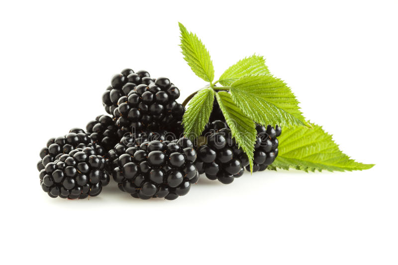 Blackberries isolated royalty free stock images