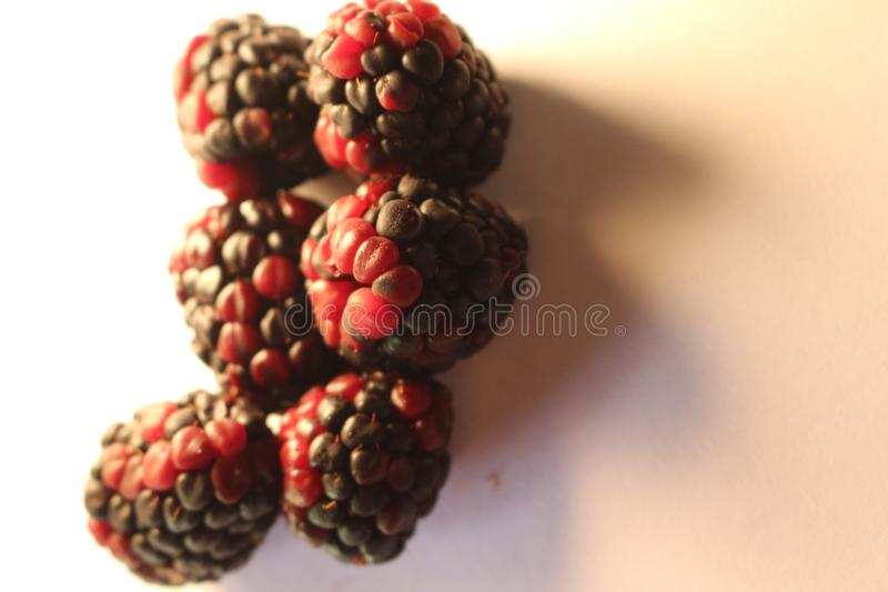 Blackberries isolated that look juicy and ripe. Blackberries are from the Rubus genus in the Rosaceae family royalty free stock images