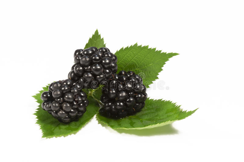 Blackberries Leaves White Background Stock Photos