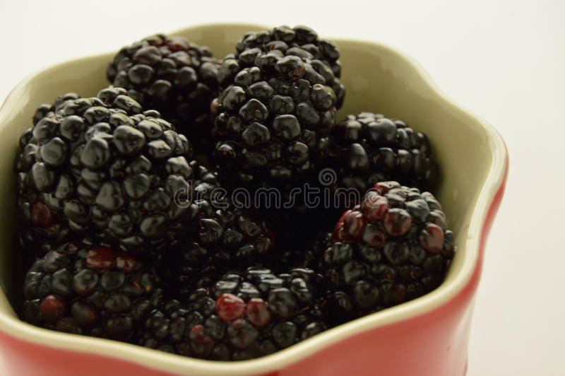 Blackberries in a red ramekin. Studio shot camera left of a red ramikin filled with blackberries on a white background stock photography