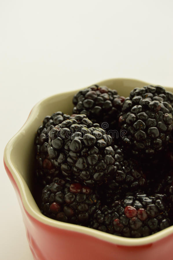 Blackberries in a red ramekin. Studio shot camera right of a red ramikin filled with blackberries on a white background royalty free stock photo