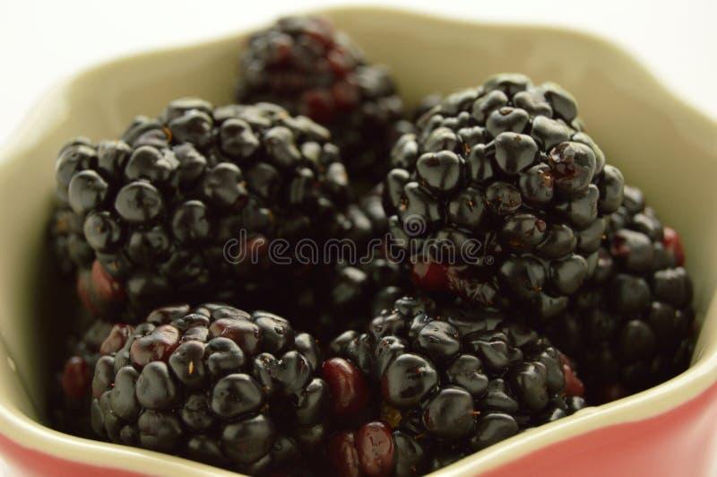 Blackberries in a red ramekin. royalty free stock photography