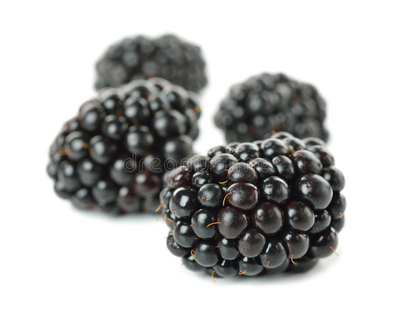 Download Blackberries On White Background Royalty Free Stock Photo - Image: 31339095