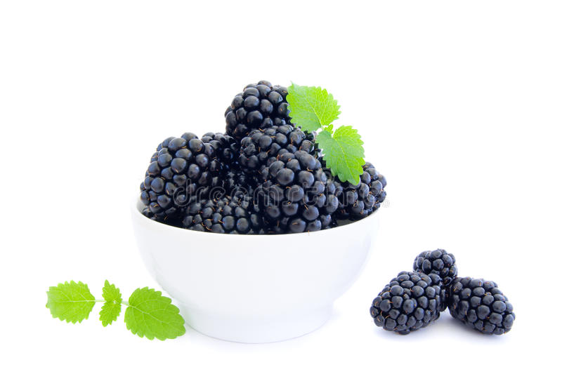 Blackberries in white bowl royalty free stock image
