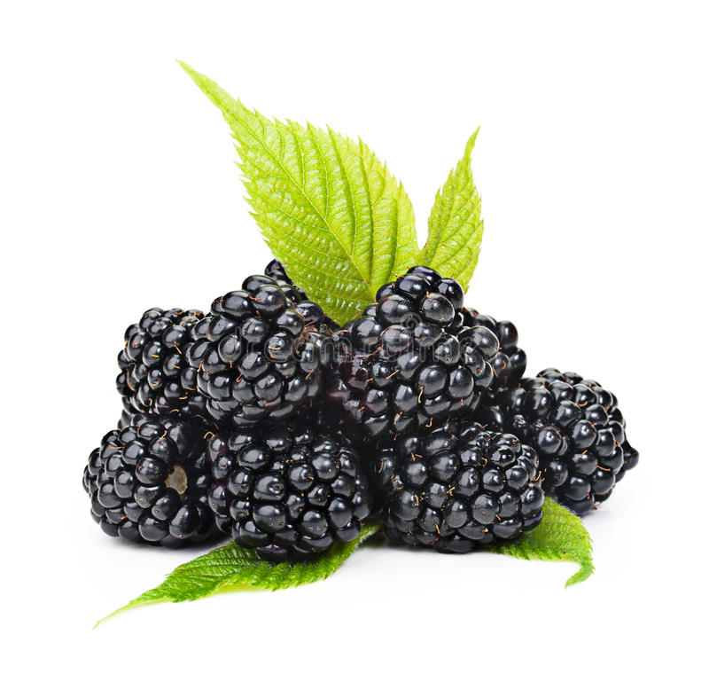 Free Blackberries With Green Leaves Isolated On White Background. Stock Image - 31871181