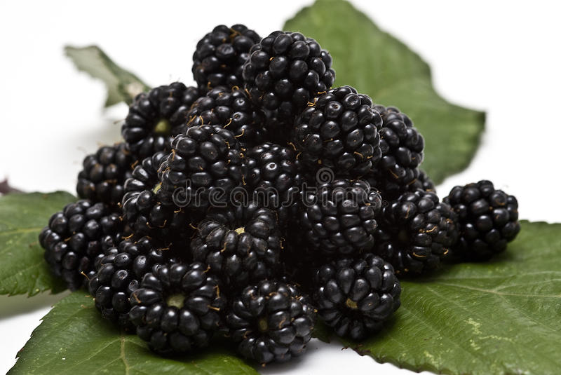 Blackberries X. Blackberries with leaves, isolated on a white background royalty free stock photography