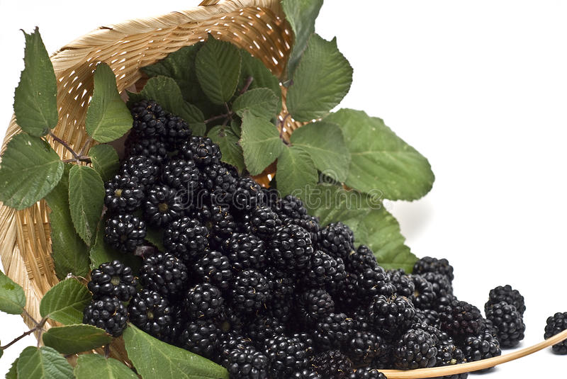 Blackberries XX. Blackberries with leaves in a basket, isolated on a white background stock photography
