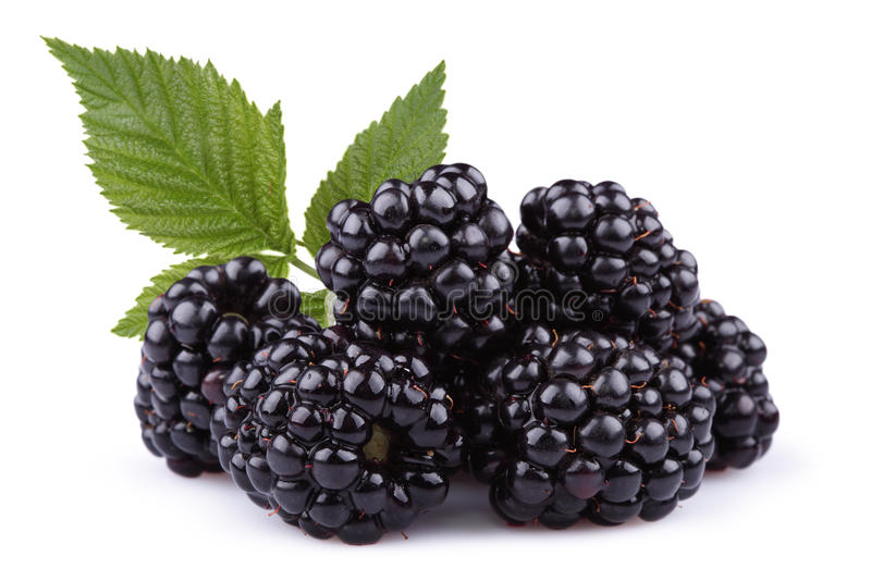 The blackberry stock photography