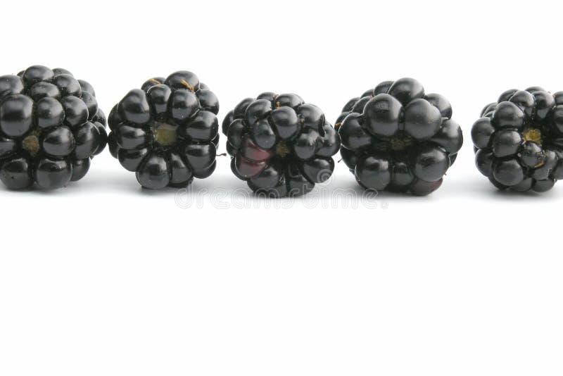 Download Blackberry stock photo. Image of garden, season, black - 245986