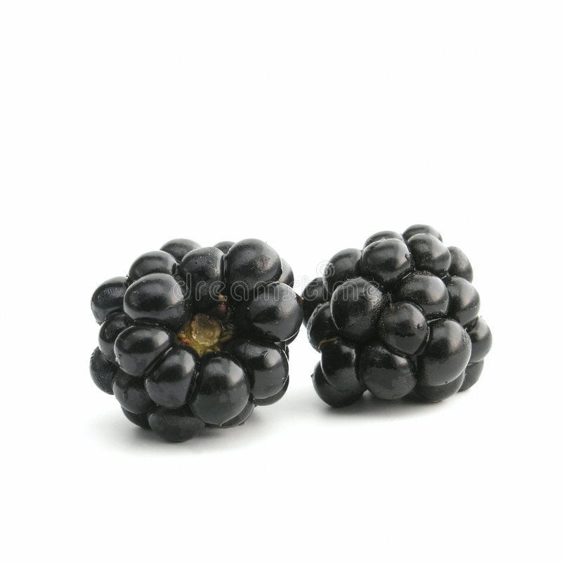 Download Blackberry stock photo. Image of foods, forest, blackberry - 245988