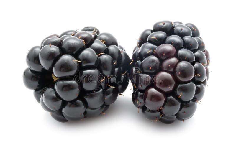 Blackberry obraz royalty free