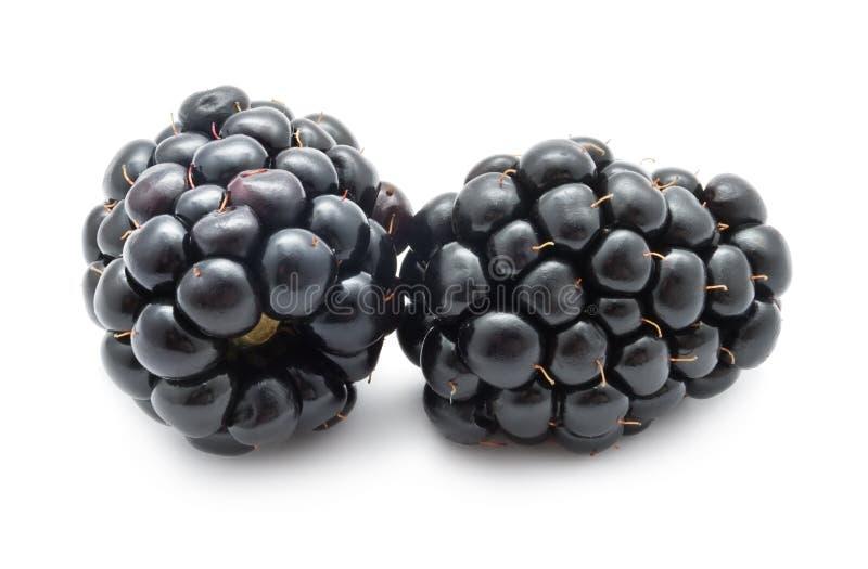 Blackberry obrazy royalty free