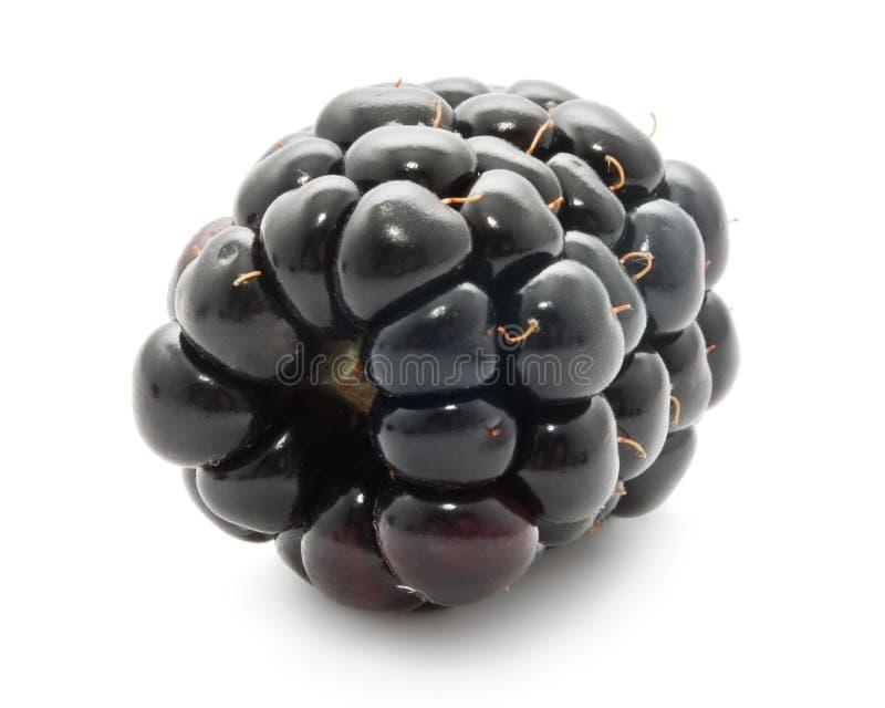 Blackberry zdjęcia royalty free