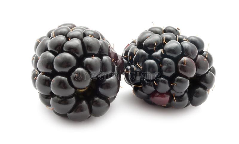 Blackberry fotografie stock libere da diritti