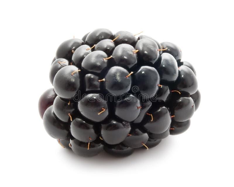 Blackberry zdjęcia stock