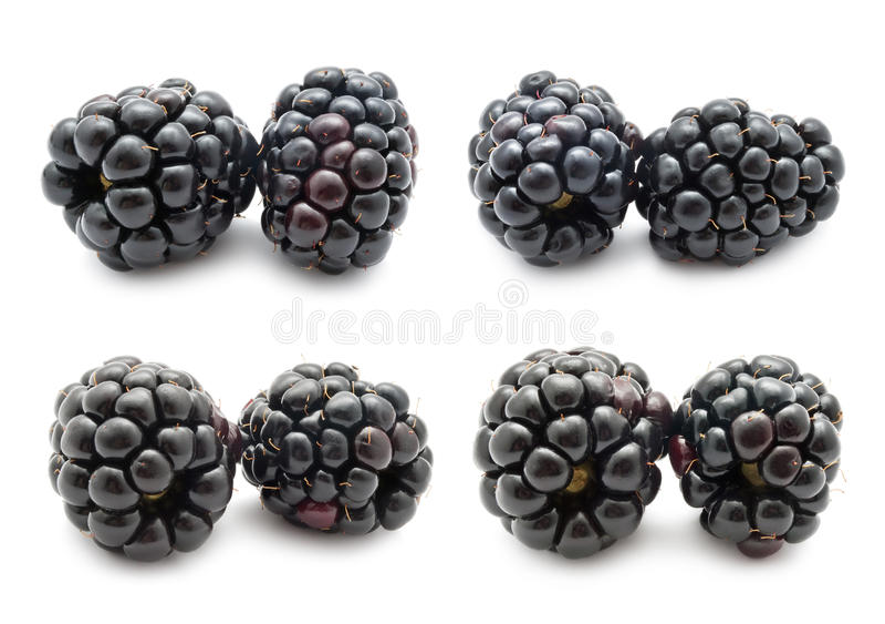 Blackberry fotografia royalty free