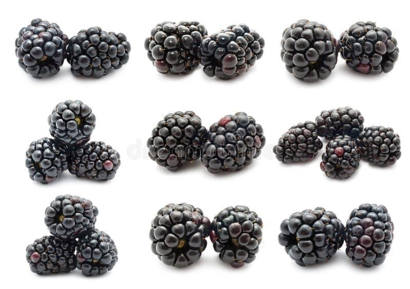Blackberry fotografia stock libera da diritti