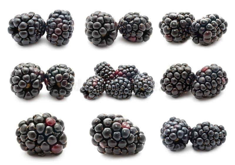 Blackberry fotografia stock