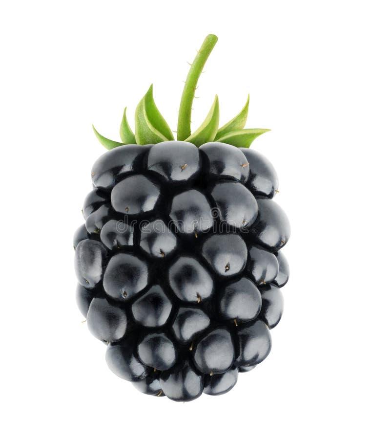 Free Blackberry Stock Image - 40731681