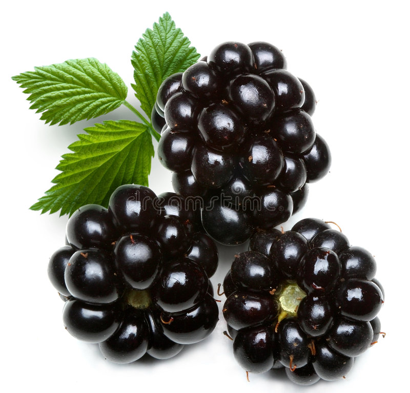 Download Blackberry stock image. Image of leaves, pulpy, dewberry - 7231819