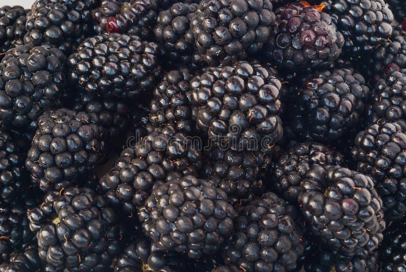 Blackberry avec des gouttes de l'eau image stock
