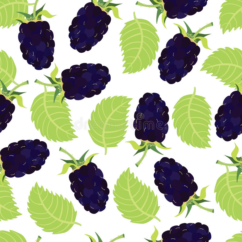 Blackberry background. Fresh healthy food stock illustration