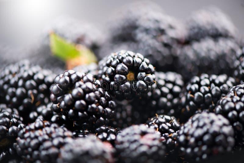 Blackberry background. Fresh ripe organic blackberries. Closeup royalty free stock photography