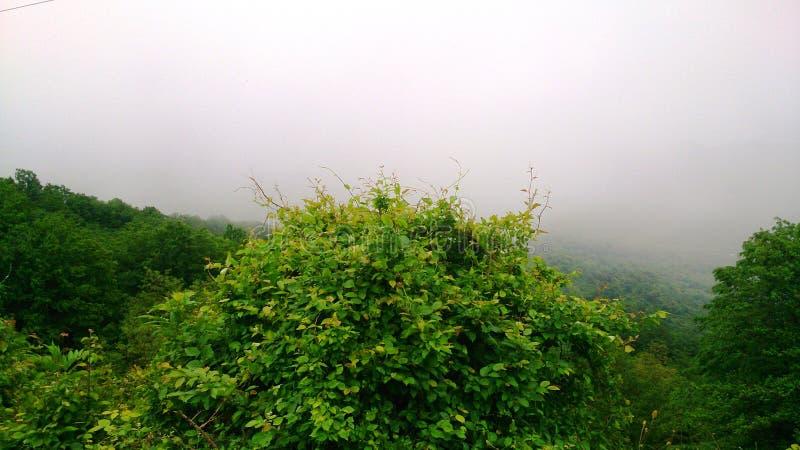Blackberry Bush auf einem Hintergrund des Nebels lizenzfreie stockfotografie