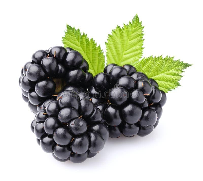 Blackberry com folhas fotografia de stock