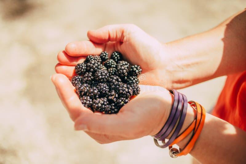 Blackberry dans des mains photo stock