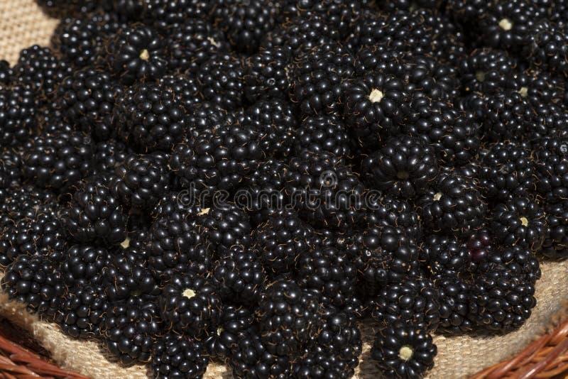 Blackberry-de bessen zijn in een rieten mand, close-up op een Zonnige dag royalty-vrije stock afbeelding