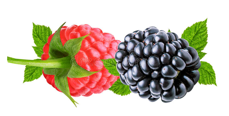 Blackberry e framboesas isolados no branco imagem de stock