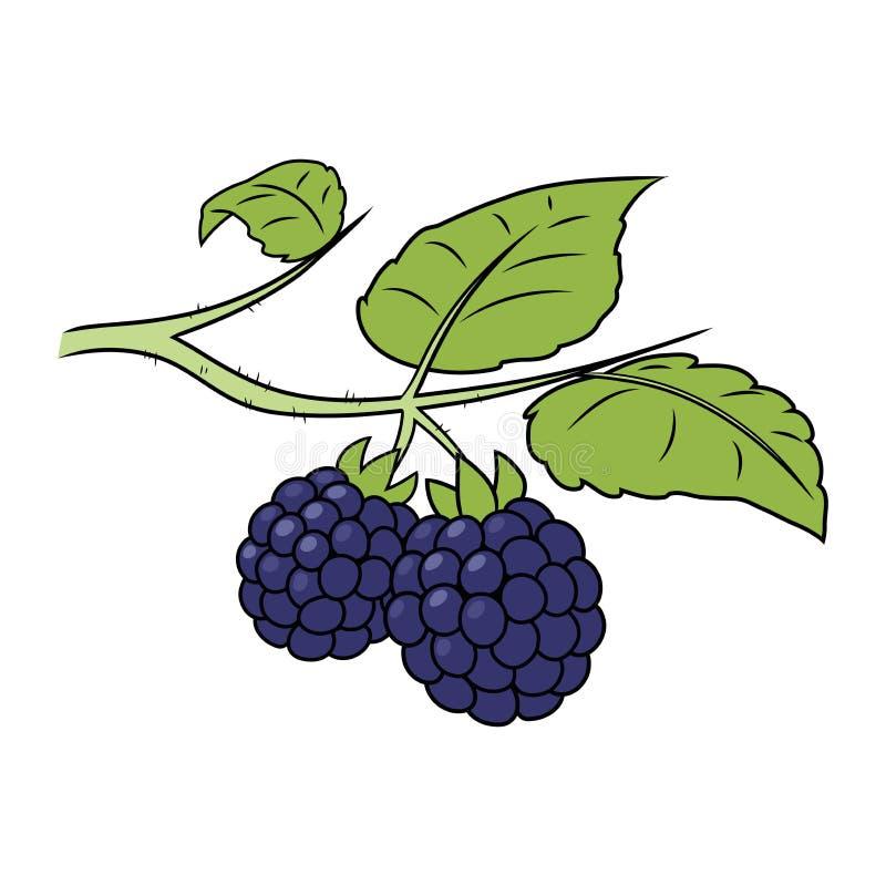Blackberry em um ramo ilustração stock