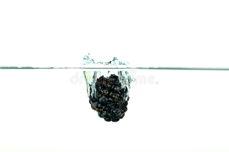 Blackberry falling into water with a splash royalty free stock photos