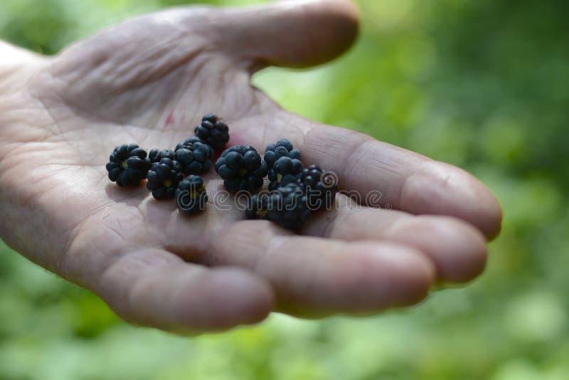 Blackberry Forest Silence Nature Beauty Trees photo libre de droits