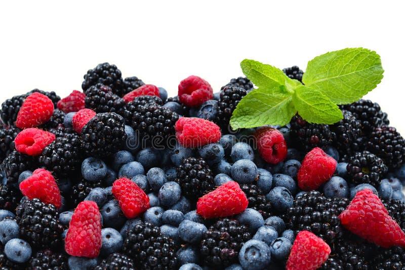 Blackberry, framboise, myrtille et fond en bon état photographie stock libre de droits