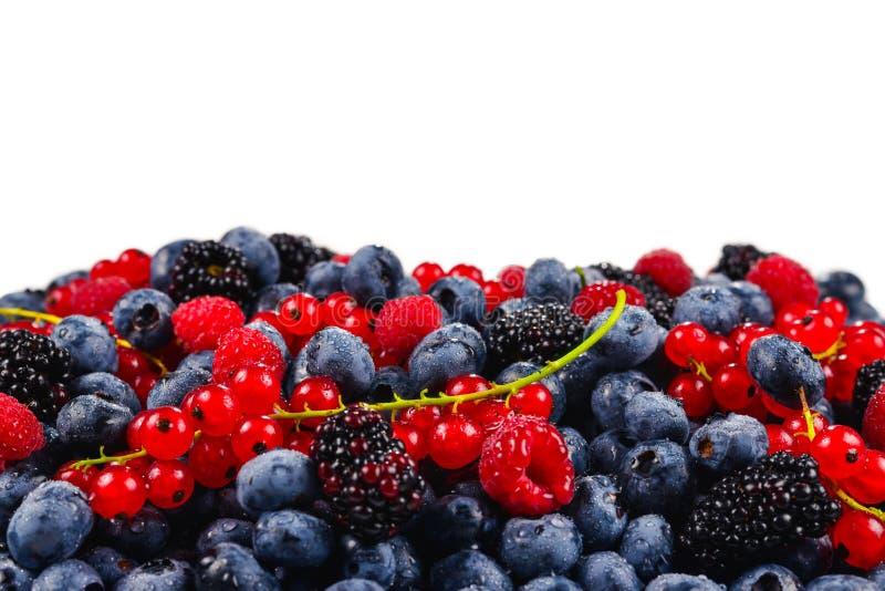 Blackberry, framboise, myrtille, groseille rouge et fond en bon état D'isolement sur le blanc Copiez l'espace photographie stock libre de droits