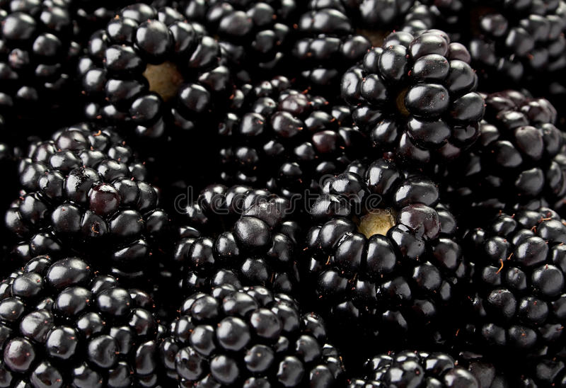 Blackberry fruit background royalty free stock photography