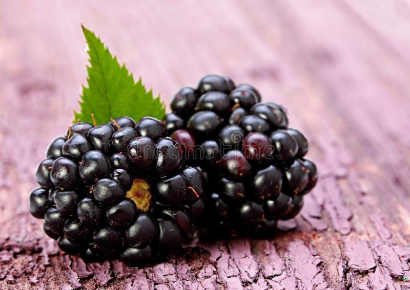 Blackberry-fruit met blad royalty-vrije stock fotografie