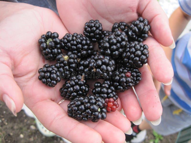 Blackberry in haar handen royalty-vrije stock foto