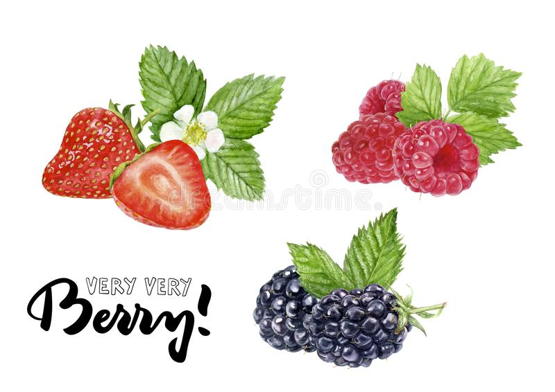 Blackberry hallon, illustration för attraktion för hand för jordgubbevattenfärgillustration vektor illustrationer
