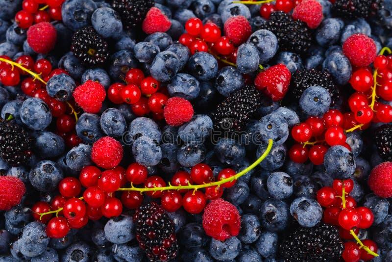 Blackberry, Himbeere, Blaubeere, rote Johannisbeere und tadelloser Hintergrund lizenzfreies stockfoto