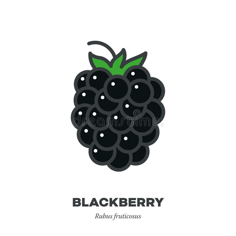 Free Blackberry Icon, Filled Outline Style Vector Stock Images - 153264874