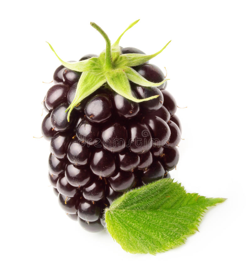 Download Blackberry isolated stock image. Image of juicy, fruity - 42257601