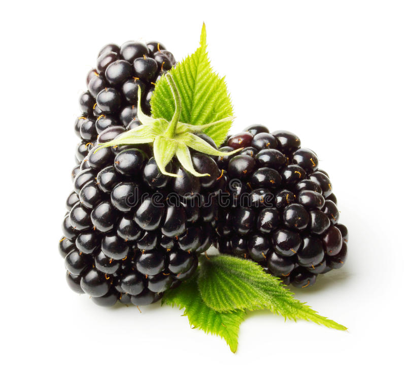 Download Blackberry Isolated Stock Photo - Image: 42257663